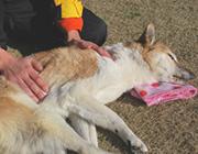 老犬介護の知識や病気についての取組み