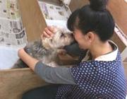 老犬ホームというのは、飼い主さんが飼育放棄する施設ではなく、本当に愛犬の事を考えて、悩み預けた方達ばかりです。