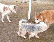 老犬という弱い立場の犬達を守っていけるように今後も老犬介護の発信に取り組み、より良いペット業界に挑戦していきます!